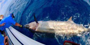Two Oceans Marlin Tournament Struisbaai